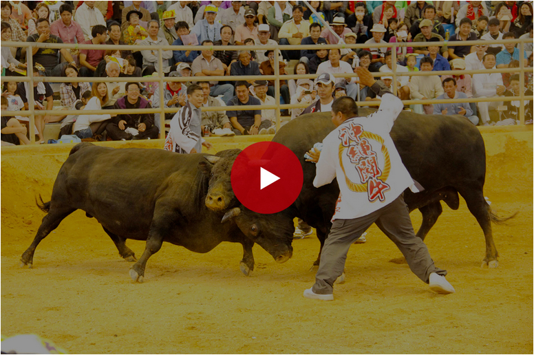 bullfighting-movie-mod