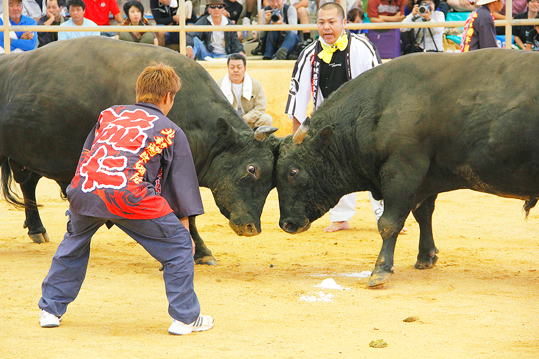 bullfighting005