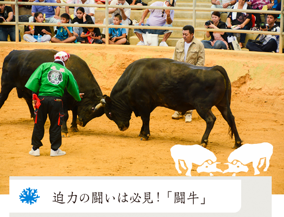 homepage-bullfight