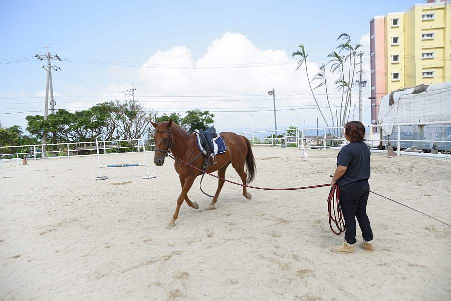 horse back riding in the wind mihara riding club うるま時間